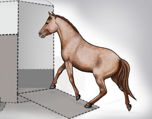 Verladetraining für Pferde