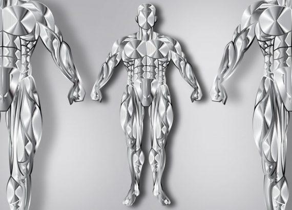 Muskeln und deren Gesundheit