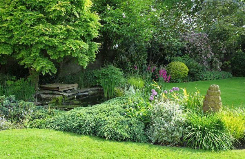 Englischer Rasen – aber wie?