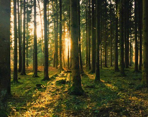 Waldbaden und Naturtherapie - Im Wald zur inneren Ruhe finden