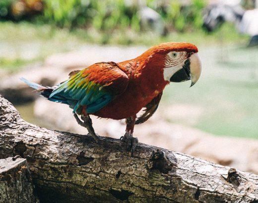 Verstehe deinen Papagei und ihr werdet dicke Freunde