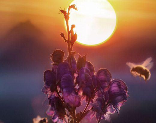 Apitherapie, das wissen um die heilenden Wirkungen von Honig