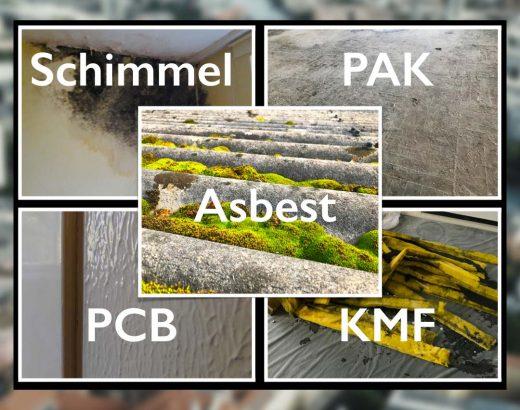 Schadstoffe in Immobilien - das Umfangreiche und zertifizierbare Wissen im Mentoring